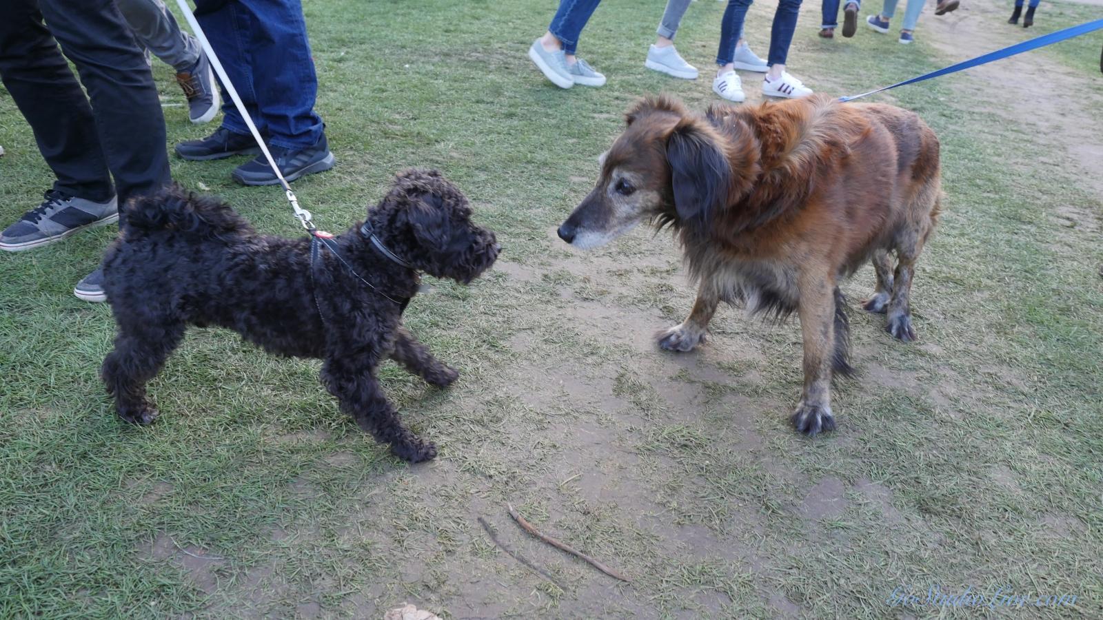 Cheltenham Jazz Dogs 0001