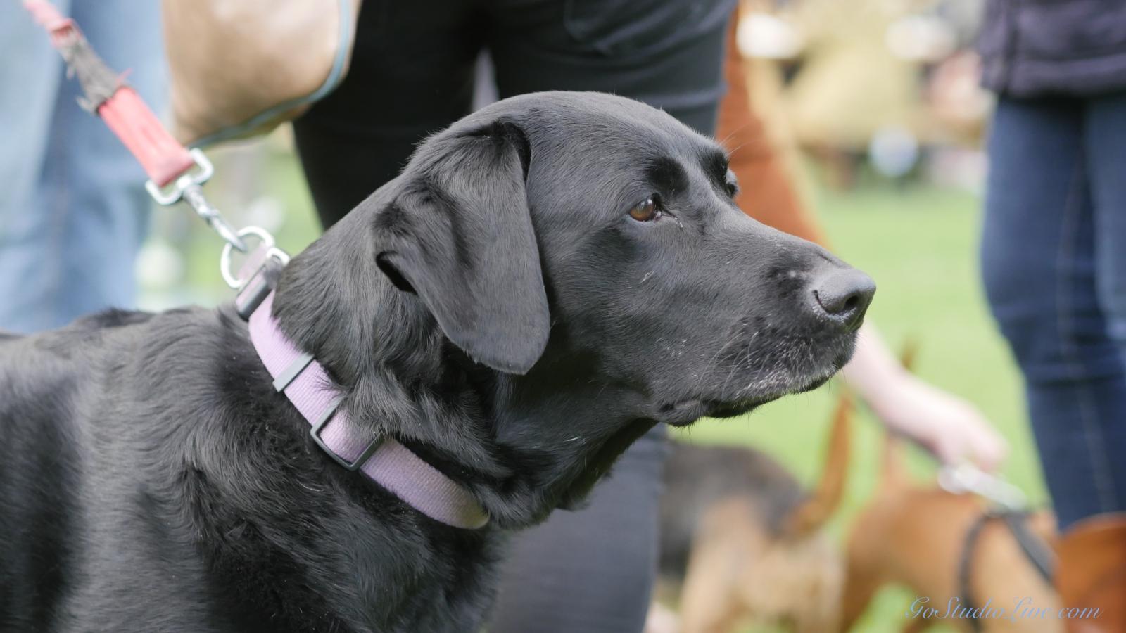 Cheltenham Jazz Dogs 0003