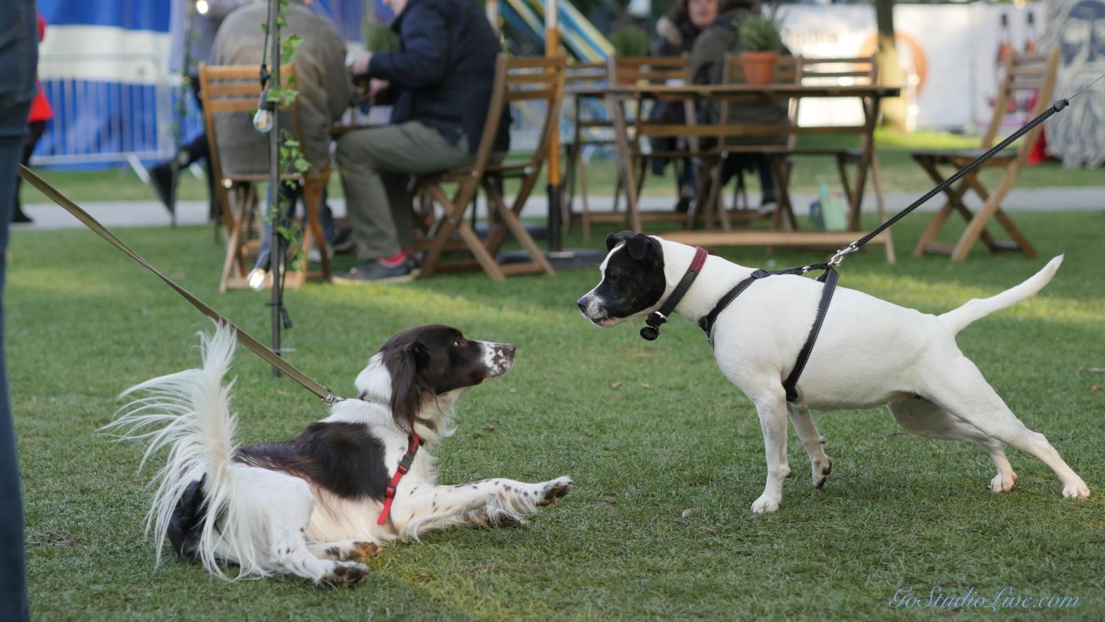 Cheltenham Jazz Dogs 0007