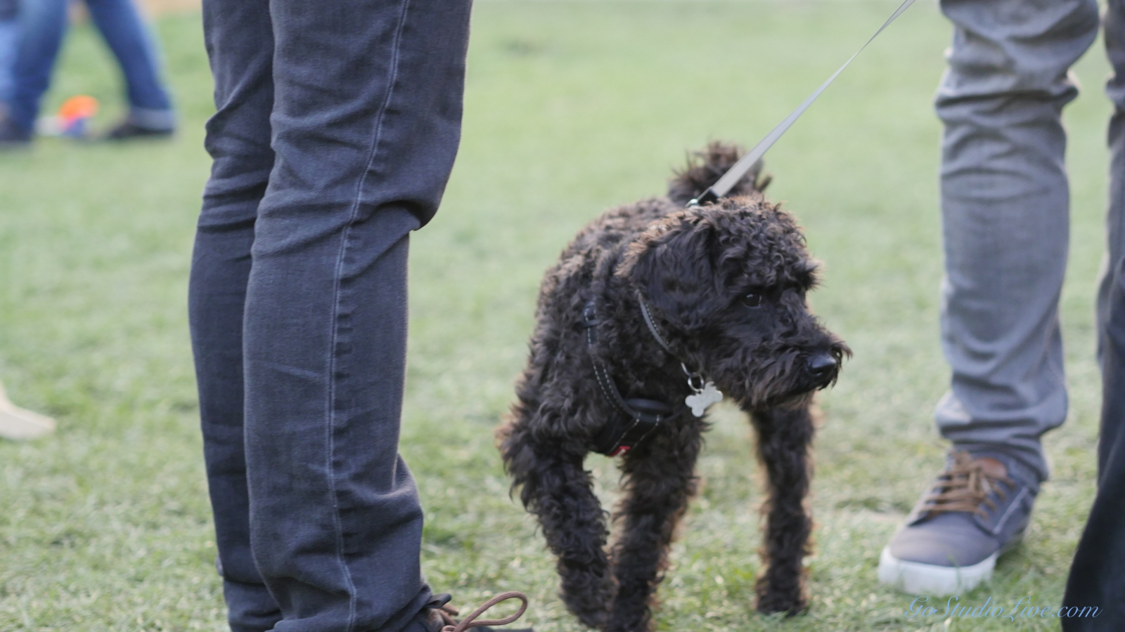 Cheltenham Jazz Dogs 0008